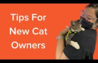 10 Tips for New Cat Owners 2021