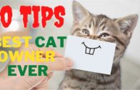 10-Tips-to-Help-You-Become-the-Best-Cat-Owner-Ever
