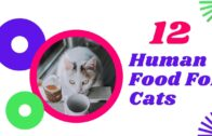 12-Human-Foods-That-Are-Safe-For-Your-Cat-to-Eat-2021-Cat-Health-Tips-Pet-Care