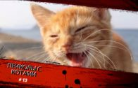 13-2020-Funny-cats.