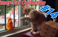 14-If-you-want-a-funny-cat-watch-this-video