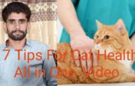 17-Tips-For-Cat-Health-And-Care-Dr-Ansar-Malik