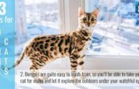 3 Tips To Take Care of Your Bengal Cat