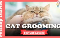 5-Elements-of-Cat-Grooming-for-Cat-Lovers-Petshop.PH_