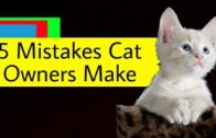 5-Mistakes-Cat-Owners-Make-Info-Guy