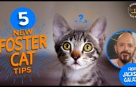 5-Tips-for-your-New-Foster-Cat