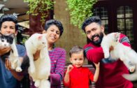 All-about-persian-cats-part-2-best-caring-tips-and-trick-for-Persian-cats-MalayalamAdams-vlog