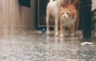 Angry-Cat-VS-Dog-Funny-Compilation-2021-Funny-Cats-and-Dogs-Compilation-Cats-And-Dogs-video