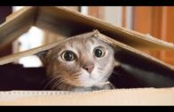 Angry-Funny-Cats-Video-Funny-Cat-Fails-Funny-Cat-Compilation