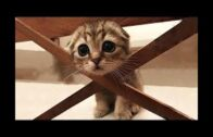Baby Cats – Cute and Funny Cat Videos Compilation #58
