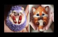 Baby-Animals-Funny-Cats-and-Dogs-Videos-Compilation-2020-7-Cute-animals