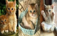 Baby-Cats-Cute-and-Funny-Cat-Videos-Best-video-ever..-Smile-of-Cuties