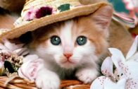 Baby-Cats-Cute-and-Funny-Cat-Videos-Compilation-1-Cotcat