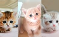 Baby-Cats-Cute-and-Funny-Cat-Videos-Compilation-1-ZFR-STUDIOS