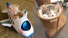 Baby-Cats-Cute-and-Funny-Cat-Videos-Compilation-11-CC-Animals