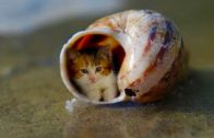 Baby-Cats-Cute-and-Funny-Cat-Videos-Compilation-12-Animals-Love