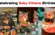 Baby-Cats-Cute-and-Funny-Cat-Videos-Compilation-2020-Eyebleach-Inside