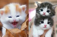 Baby-Cats-Cute-and-Funny-Cat-Videos-Compilation-8-Gatitos-Bebes-Tiernos-jpg