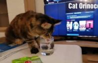 Baby-Cats-Cute-and-Funny-Cat-Videos-Compilation-CatOrinoco-1