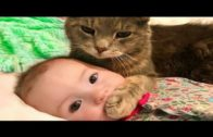 Baby-Cats-Cute-and-Funny-Cat-Videos-Compilation2-Cute-and-Cat