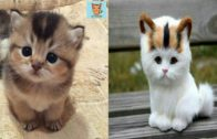 Baby-Cats-cute-and-Funny-Cat-videos-compilation-FAV-CHANNEL
