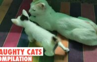 Funny Cats Compilation 2021 Part 12