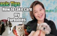 Basic-Tips-and-How-to-take-Care-my-Furbabies