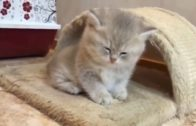 CUTE-AND-FUNNY-CAT-VIDEO-BABY-CATS-KITTENS