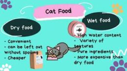 Care-Tips-to-Keep-Your-Cat-Healthy