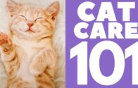 Cat-Care-101-How-to-take-care-of-your-cat
