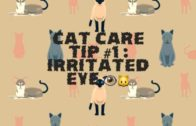 Cat-Care-Tip-1-Irritated-Eye-