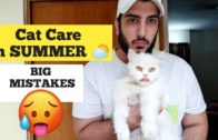 Cat-Care-in-Summer-How-to-keep-your-Cat-Cool-in-summer-Hot-weather-Cat-care-tips