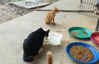 Funny Cats and Cute Kittens Playing and Fighting in Bowls