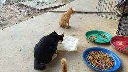 Cat-Cat-Fighting-Cat-Eating-Funny-Cats-and-Kittens-Meowing-Compilation