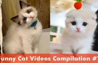 Cute And Funny CAT Videos,(IMPOSSIBLE) Funny Animals Video Try Not To laugh,😹 *Letgo Funny*
