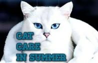 Cat-care-in-SummerHow-to-keep-your-cat-Cool-in-summerHot-weather-cat-care-tips
