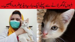Cats-Care-Tips-for-Bringing-a-new-cat-home-in-urdu