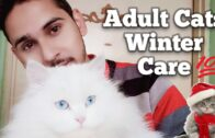 Cats Winter Care_Complete Pro Tips