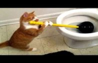 Funny Cat Meowing Compilation