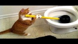 Cheerful-and-Funny-Cat-Videos-That-Keep-You-Smiling