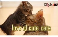 Cute-Cats-Cute-and-Funny-Cat-Videos-Compilation-Funny-Cats-Compilation-pets-2020ClicKnBuzZ
