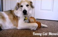 Cute-Funny-cats-and-dogs-video-compilation-2020