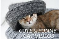Cute-and-funny-cat-videos