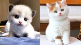 Cute-is-Not-Enough-Funny-Cats-and-Dogs-Compilation-11