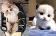 Cute-is-Not-Enough-Funny-Cats-and-Dogs-Compilation-7