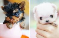 Cutest-Baby-Pets-Ever-Cute-and-Funny-Cats-and-Dogs-Video-Compilation.-Best-video-ever-2