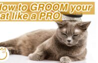 DONT-DO-THIS-When-Grooming-Your-Cat-at-Home-Top-Tips-2021