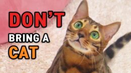 Dont-bring-a-cat-before-know-itDino-cat-information