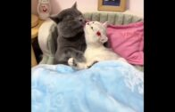 Funniest-Cats-Dont-try-to-hold-back-Laughter-Funny-Cats-Life-1