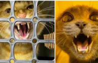 Funny-Cat-Funny-moods-of-cats-afraid-of-injection